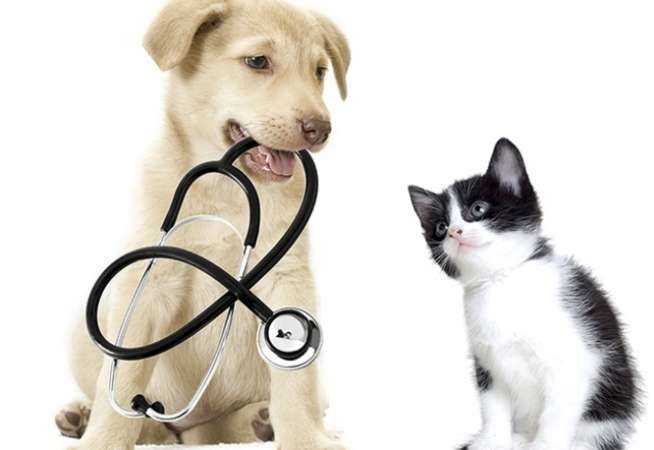 veterinary-services
