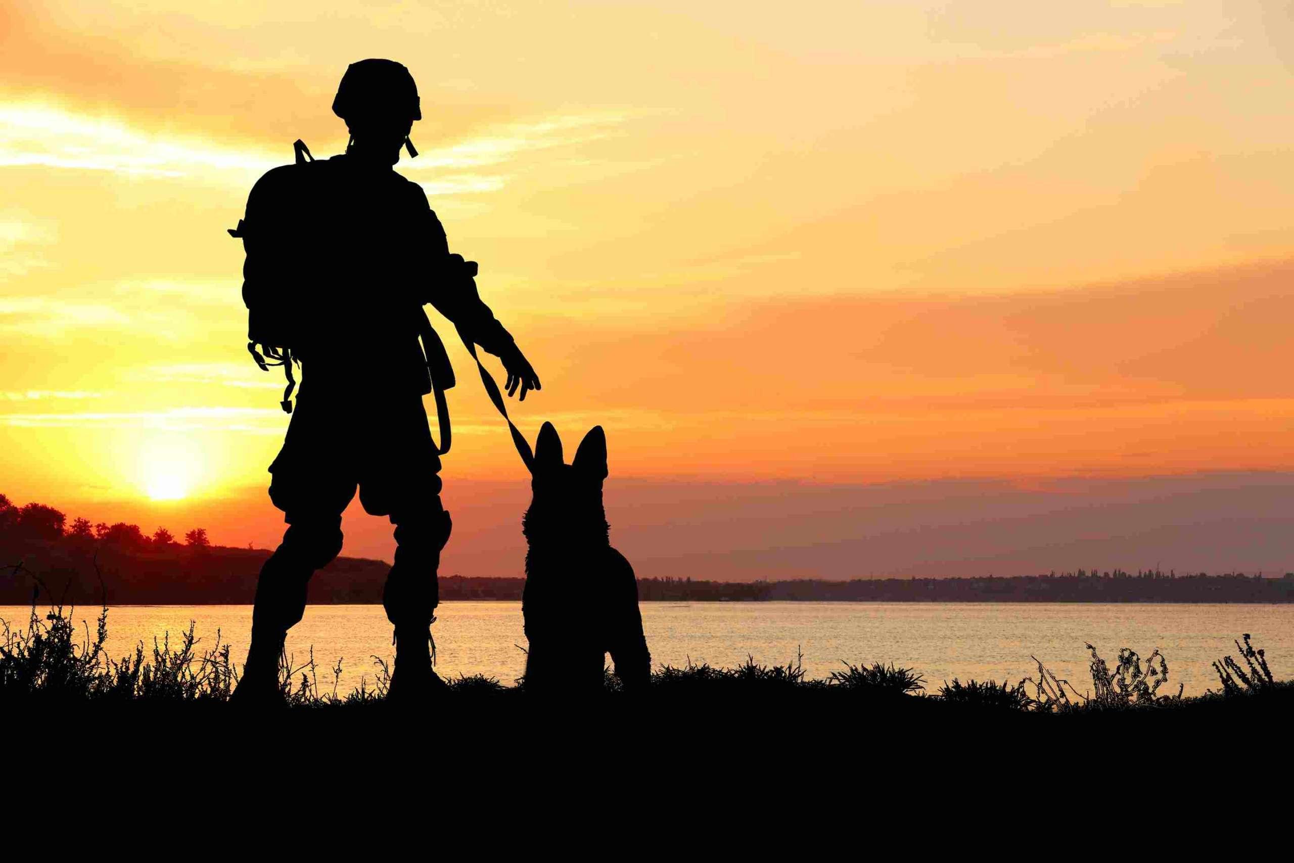 defence pet